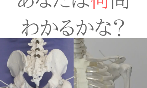 関節の形状