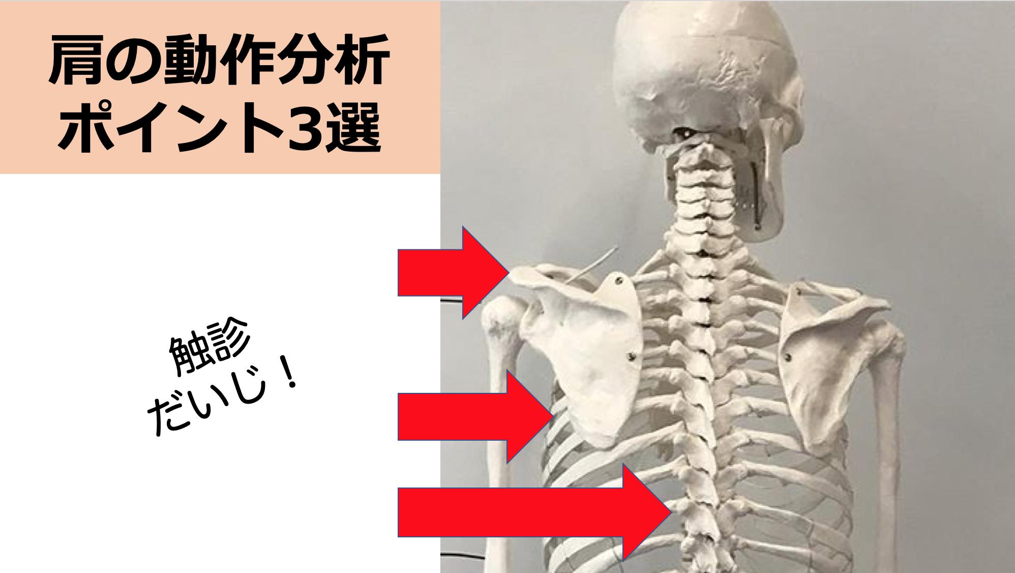 介入に迷ったら、ココを見よう!肩の動作分析で見るべきポイント3選
