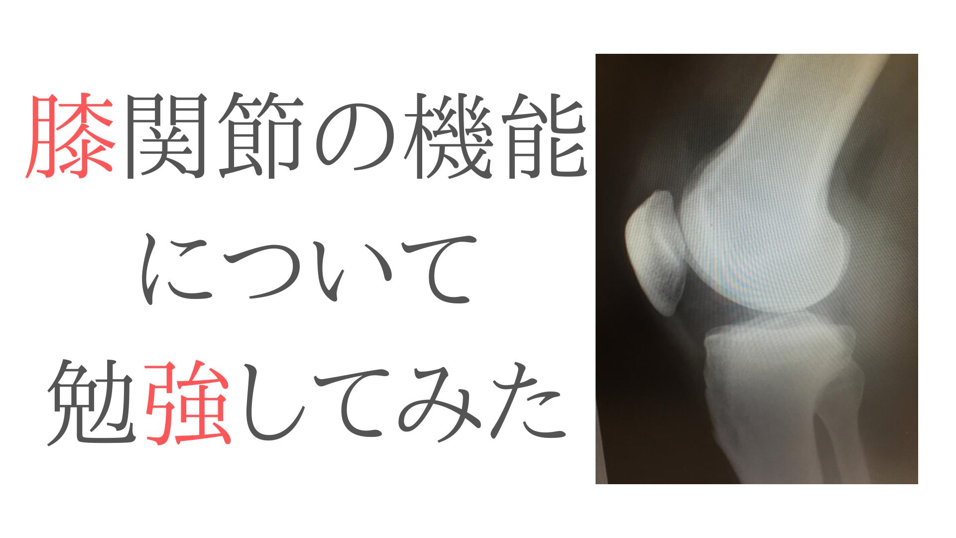 膝膝関節の機能と解剖について勉強してみた